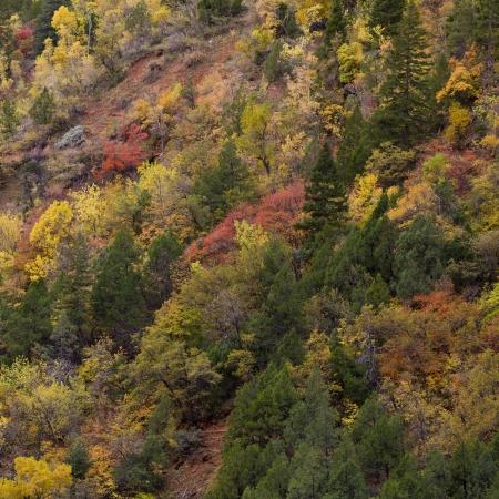Trees on a mountain, Zion National Park, Utah, USA Stock Photo - 14261234