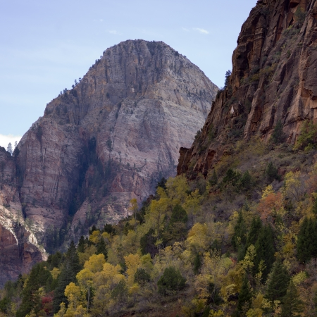 Trees on a mountain, Zion National Park, Utah, USA photo