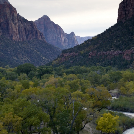 Trees in a forest with a mountain range in the background, Zion National Park, Utah, USA