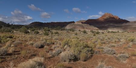 paria: Plants in a desert, Paria Canyon, Paria, Kane County, Utah, USA