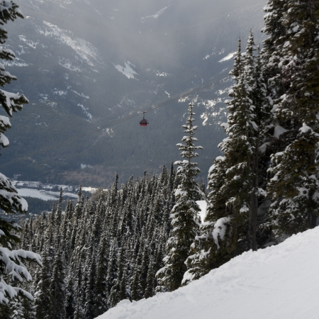Peak 2 Peak Gondola over a forest, Whistler, British Columbia, Canada photo