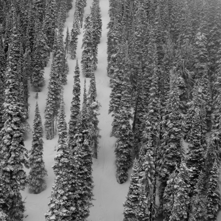 Forest in winter, Whistler, British Columbia, Canada photo