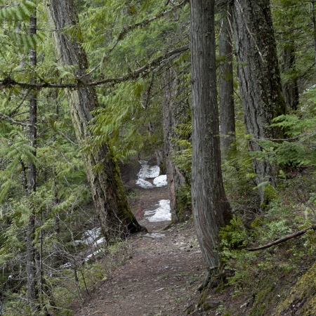 Trees in a forest, Nairn Falls Provincial Park, Whistler, British Columbia, Canada photo