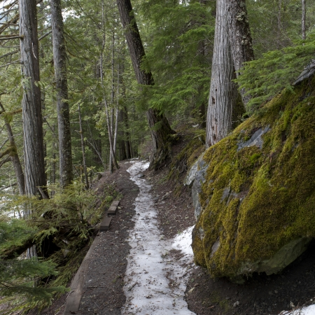 Snow melting from a trail, Nairn Falls Provincial Park, Whistler, British Columbia, Canada photo