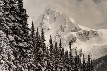 whistler: Snow covered trees with mountains, Whistler, British Columbia, Canada