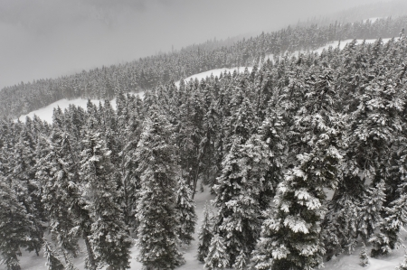 whistler: Snow covered trees, Whistler, British Columbia, Canada Stock Photo