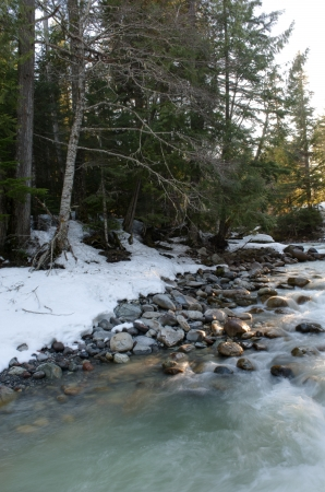 whistler: River flowing through a forest, Whistler, British Columbia, Canada