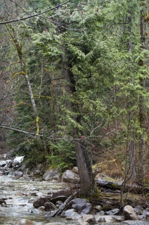 River flowing through a forest, Shannon Falls Provincial Park, British Columbia, Canada photo