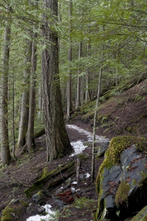 Trees along a trail in a forest, Nairn Falls Provincial Park, British Columbia, Canada photo