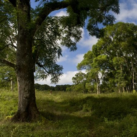 trees photography: Forest, Santa Cruz Island, Galapagos Islands, Ecuador Stock Photo