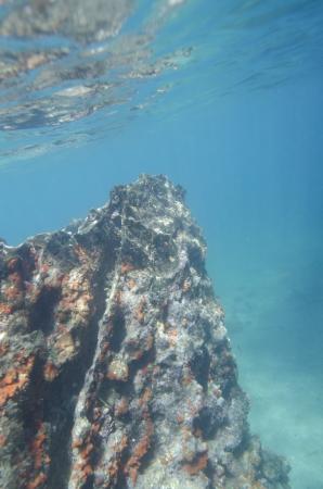 bartolome: Underwater scene at Bartolome island, Galapagos Islands, Ecuador
