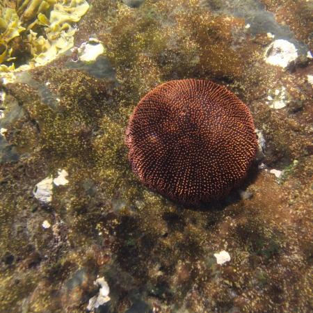 Coral underwater, Tagus Cove, Isabela Island, Galapagos Islands, Ecuador