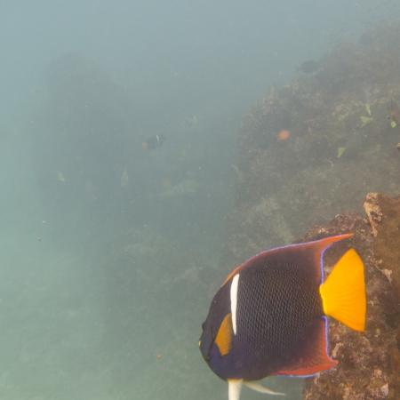 High angle view of a fish underwater, Gardner Bay, Espanola Island, Galapagos Islands, Ecuador