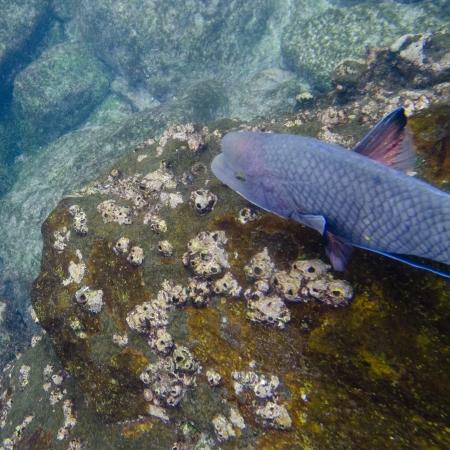 levit: High angle view of a fish underwater, Gardner Bay, Espanola Island, Galapagos Islands, Ecuador
