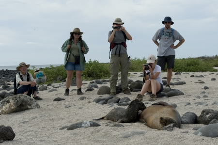 Turistas fotografiando un lobo marino de Galápagos (Zalophus californianus wollebacki) cuidando a su cachorro, Isla Seymour Norte, Islas Galápagos, Ecuador