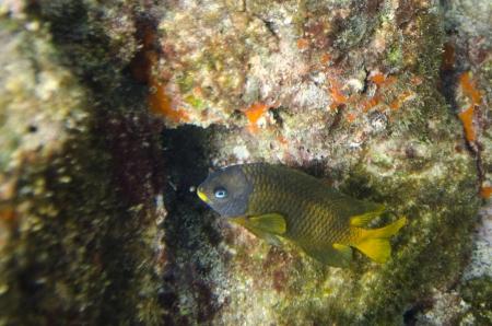 bartolome: Fish swimming underwater, Bartolome Island, Galapagos Islands, Ecuador