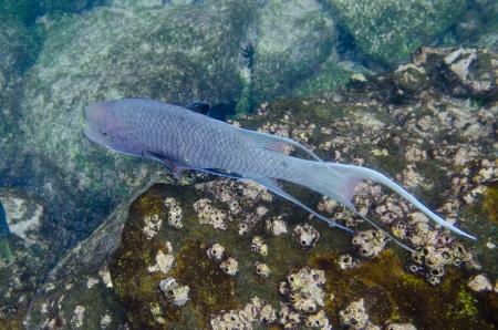 Fish swimming underwater, Gardner Bay, Espanola Island, Galapagos Islands, Ecuador Banco de Imagens