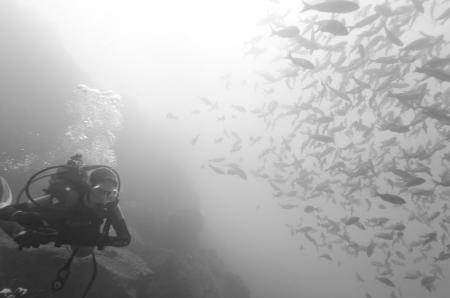 levit: Scuba diver and fish swimming underwater, Santa Cruz Island, Galapagos Islands, Ecuador Stock Photo