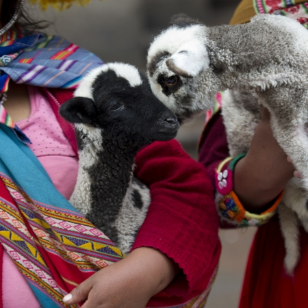 Two women holding kid goats, Cuzco, Peru Stock Photo - 16792002
