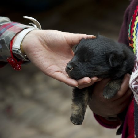 pet photography: Close-up of a person hand touching a puppy, Pisac, Sacred Valley, Cusco Region, Peru