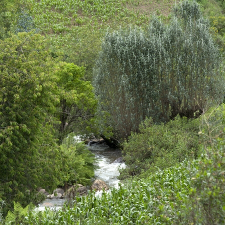 tranquilly: Stream flowing through a forest, Sacred Valley, Cusco Region, Peru Stock Photo