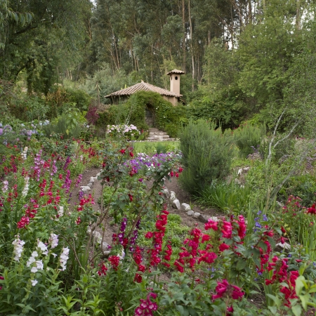 tranquilly: Flowers blooming in a garden of Willka Tika Guesthouse, Willka Tika, Sacred Valley, Cusco Region, Peru