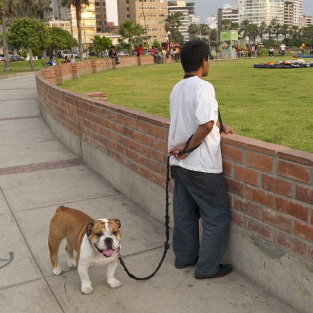 lima province: Man with his dog in a park, Av De La Aviacion, Miraflores District, Lima Province, Peru Editorial