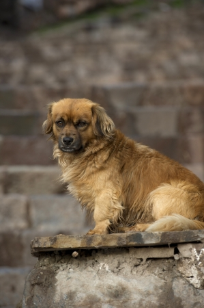 eyecontact: Close-up of a dog sitting on a slab, Cuzco, Peru