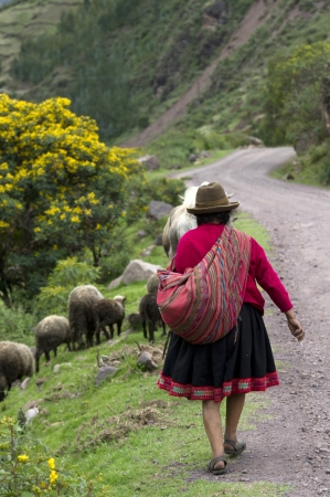 in herding: Shepherd herding sheep, Sacred Valley, Cusco Region, Peru