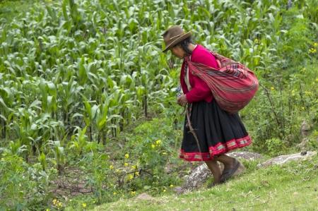 cusco region: Agricultor trabajando en el campo, Valle Sagrado, Cusco, Per�