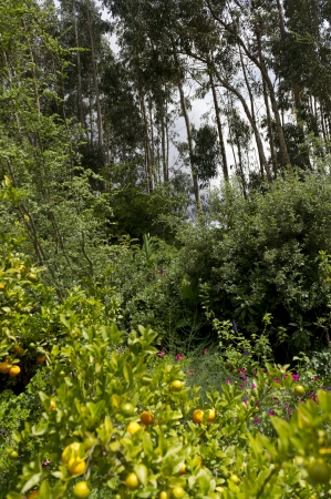 willka tika: Plants in a garden, Willka Tika, Sacred Valley, Cusco Region, Peru