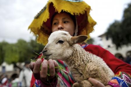 Quechua woman feeding a kid goat, Plaza Regocijo, Cuzco, Peru