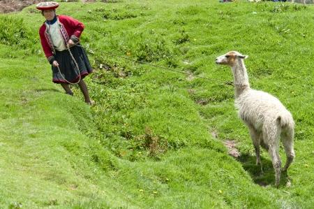 peruvian ethnicity: Mujer que tira de una llama (Lama glama) con una correa, Sacsayhuaman, Cuzco, Per� Editorial