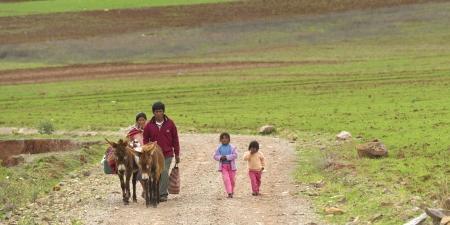 peruvian ethnicity: Familia caminando en un campo con mulas, Valle Sagrado, Cusco, Per�