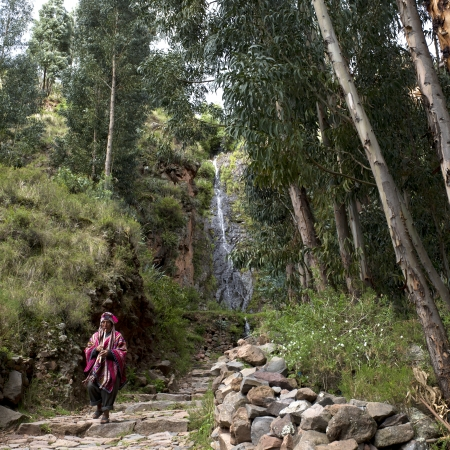 Woman walking on a stone walkway passing through a forest, Pisac, Sacred Valley, Cusco Region, Peru