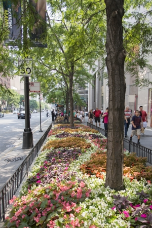 vertical divider: Flowers on a road divider in Chicago, Cook County, Illinois, USA Editorial