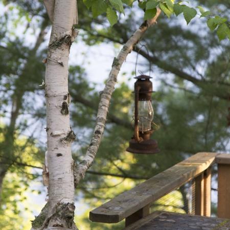 Lantern hanging from a tree branch, Ontario, Canada Stok Fotoğraf