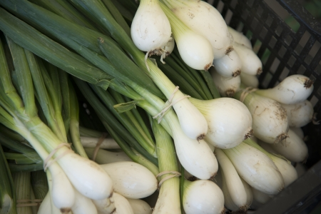 spring onions: Close-up of spring onions, Kenora, Ontario, Canada Stock Photo