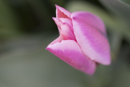 Close-up of a flower bud, Lake of The Woods, Keewatin, Ontario, Canada Imagens