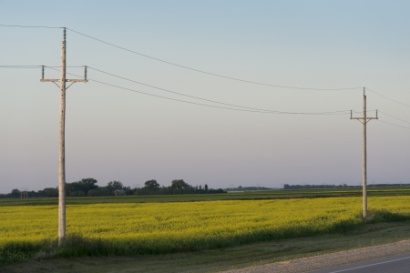 Electric cable line in a prairie field, Manitoba, Canada photo