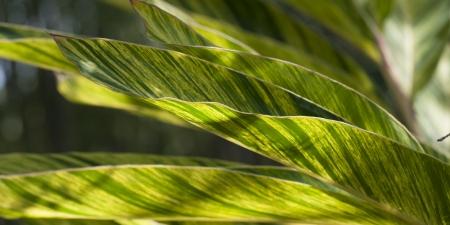 Details of leaves 版權商用圖片