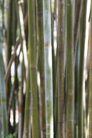 Close-up of bamboo growing