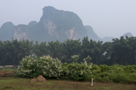 placidness: Trees on a field with mountains in the background, Yangshuo, Guilin, Guangxi Province, China