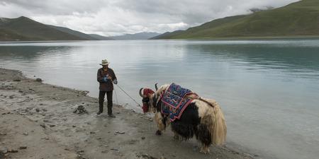 granger: Tibetan farmer with decorated Yak at Yamdrok Lake, Nagarze, Shannan, Tibet, China Editorial