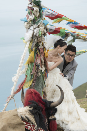 Yak in front of a newlywed couple with prayer flags, Yamdrok Lake, Nagarze, Shannan, Tibet, China