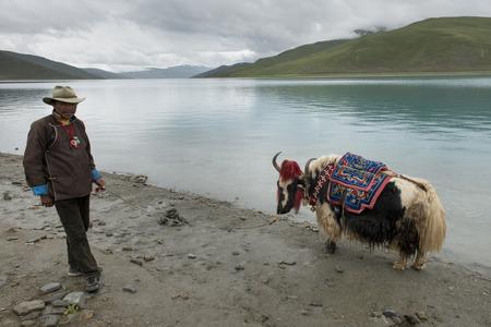 Tibetan farmer with decorated Yak at the lakeside, Yamdrok Lake, Nagarze, Shannan, Tibet, China