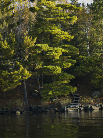 trees photography: Trees in a forest at the lakeside, Kenora, Lake of The Woods, Ontario, Canada Stock Photo
