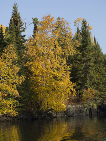 unorganized: Trees in a forest at the lakeside, Unorganized Kenora, Kenora, Lake of The Woods, Ontario, Canada