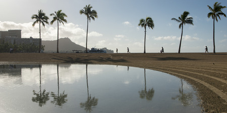 duke: Reflection of palm trees in the Duke Paoa Kahanamoku Lagoon, Waikiki, Honolulu, Oahu, Hawaii, USA