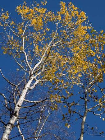 unorganized: Low angle view of trees, Unorganized Kenora, Kenora, Lake of The Woods, Ontario, Canada